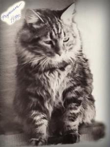 Сибирский кот Федя