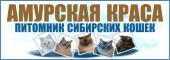 Амурская Краса. Питомник Сибирских кошек традиционных и колор-пойнтовых окрасов. Дальневосточная линия